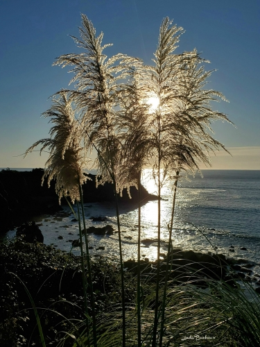 sun peeking through plants with the chetco point rock ocean and rock formation in the background